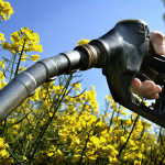 Re-Examining European Union Biofuel Policies