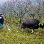 Agriculture Extension Systems in China