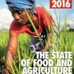 IFPRI and FAO Presenting Evidence-based Analysis of Key Issues in Food and Agriculture
