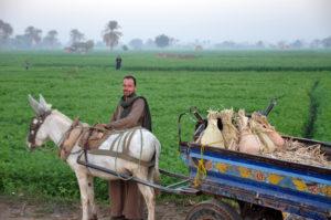 egyptian_farm