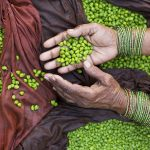 Leveraging Agriculture for Nutrition in South Asia (LANSA)